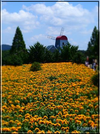 flower52h.jpg