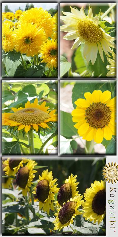 flower52i.jpg