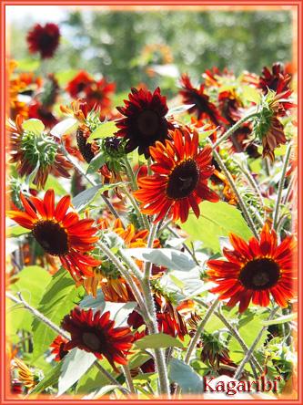 flower52j.jpg