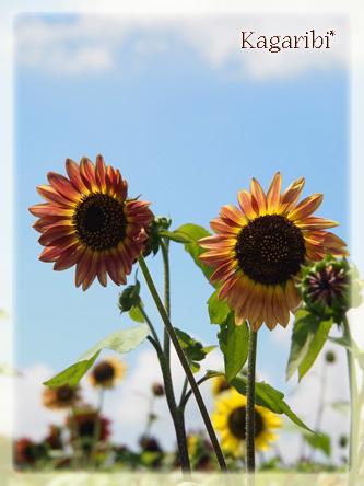 flower52k.jpg