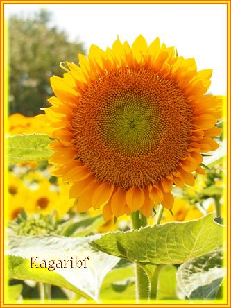 flower52l.jpg