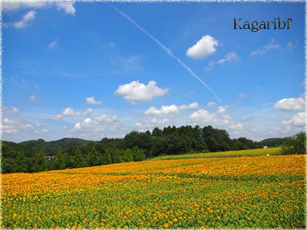 flower52m.jpg