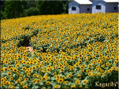 flower52n.jpg