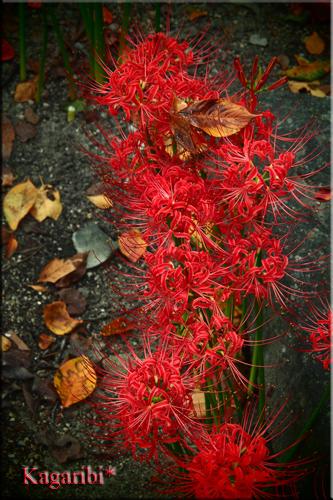 flower53a.jpg