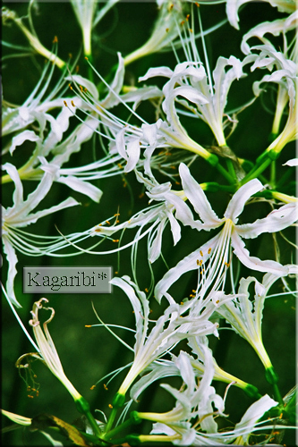 flower53c.jpg