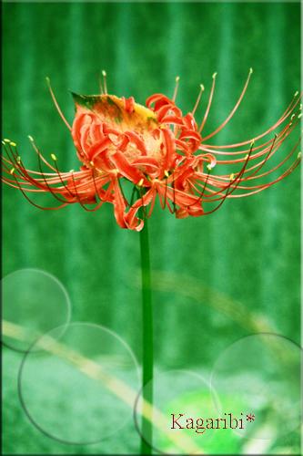 flower53e.jpg