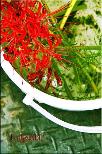 flower53f.jpg
