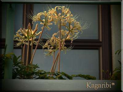 flower53g.jpg