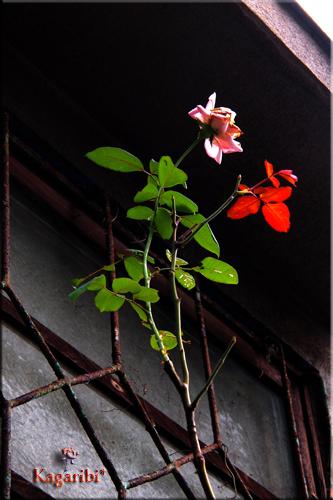 flower54.jpg