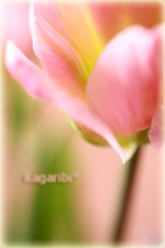 flower58a.jpg