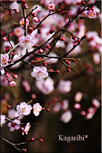 flower59a.jpg