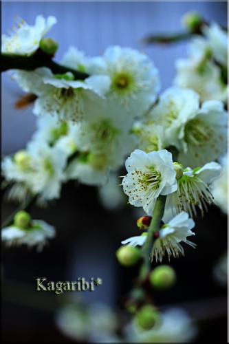 flower59b.jpg
