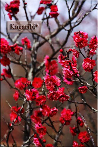 flower59d.jpg