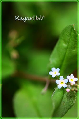 flower63c.jpg