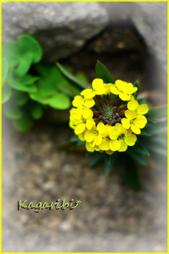 flower63d.jpg