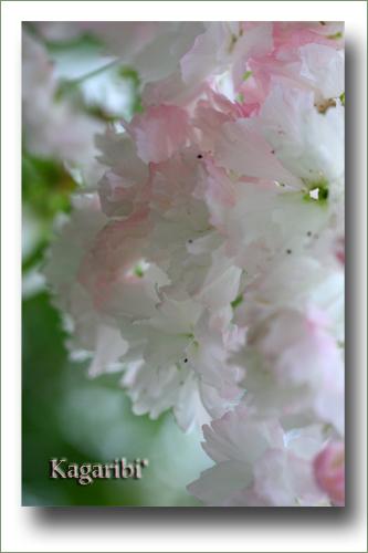 flower67b.jpg