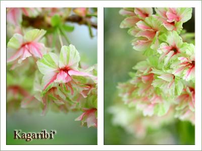 flower67c.jpg
