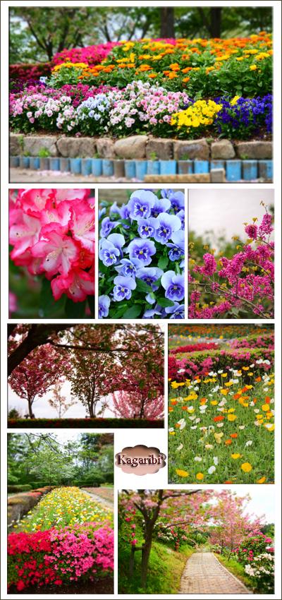 flower67d.jpg