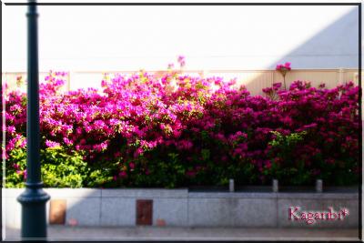 flower68a.jpg