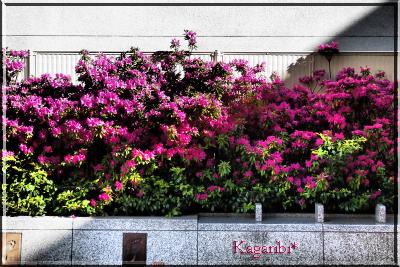 flower68b.jpg