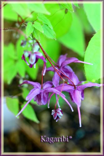 flower69a.jpg