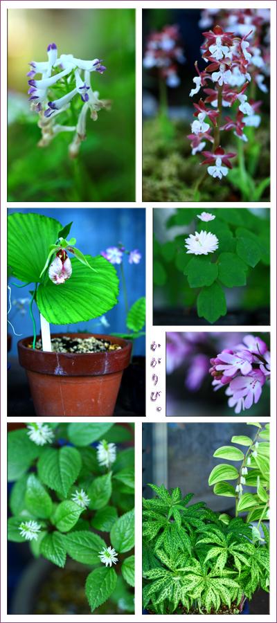 flower69b.jpg