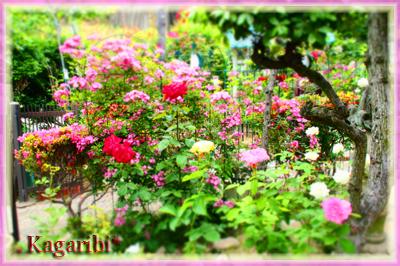 flower71b.jpg