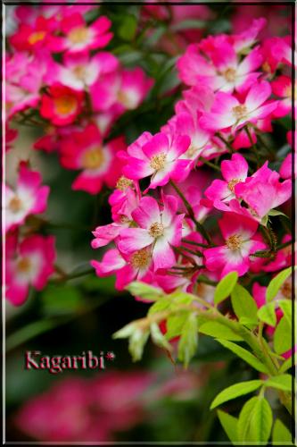 flower71c.jpg