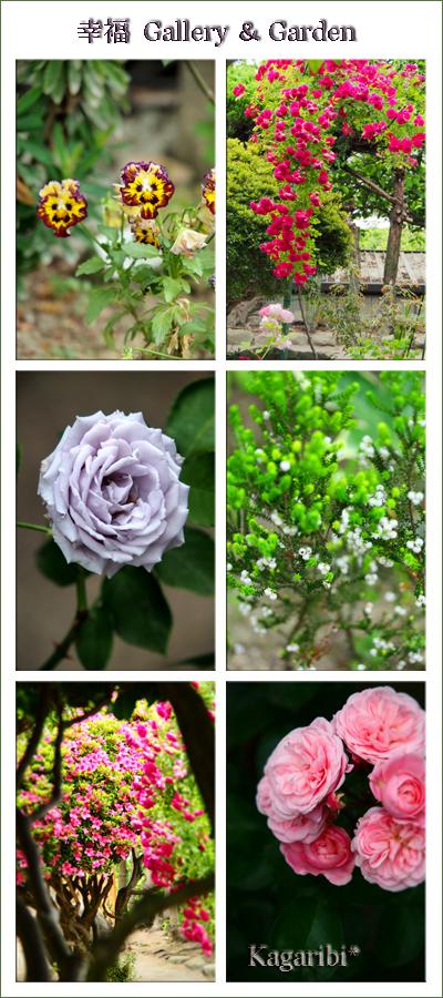 flower71d.jpg