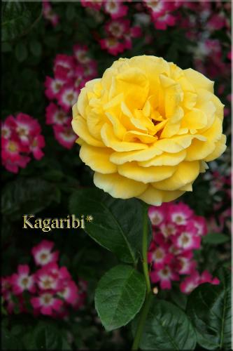 flower71e.jpg