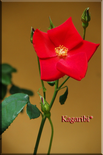 flower71f.jpg