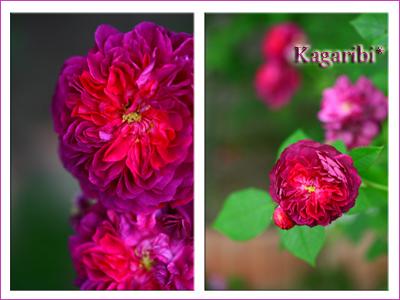 flower71g.jpg