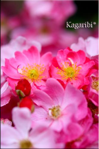 flower71h.jpg