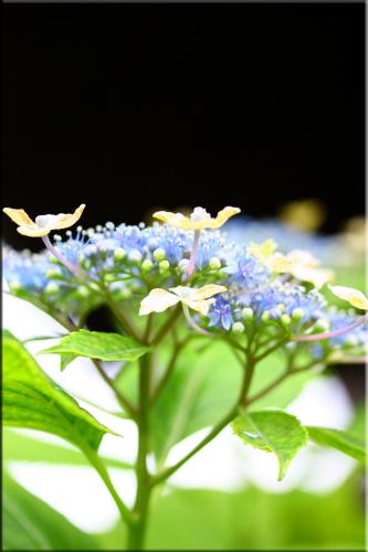flower73a.jpg