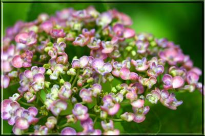 flower73b.jpg