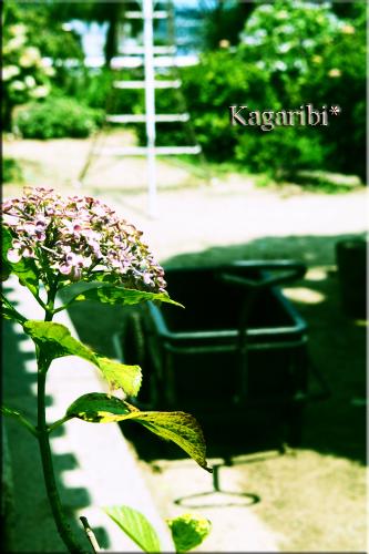 flower73c.jpg