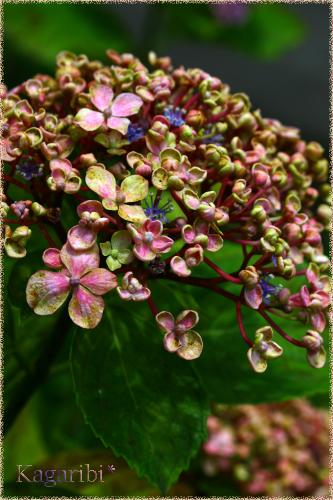 flower73d.jpg
