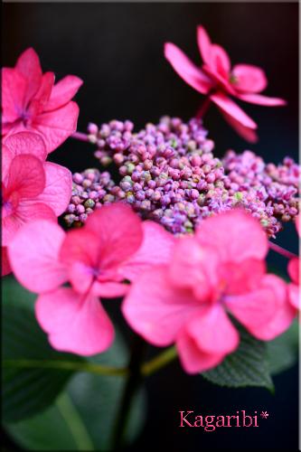 flower73e.jpg