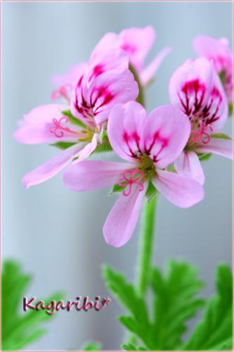 flower74a.jpg
