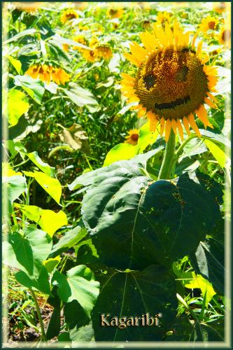 flower76b.jpg