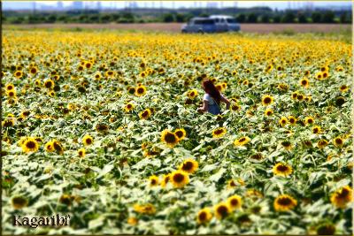 flower76c.jpg