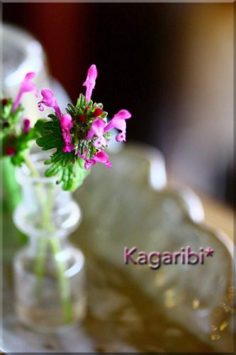 flower77a.jpg