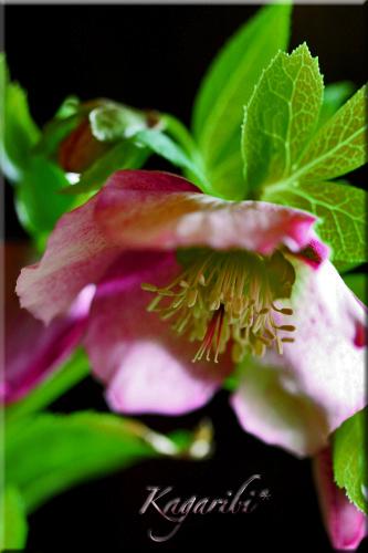 flower77b.jpg