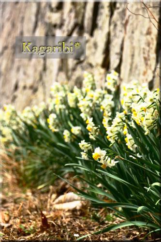 flower78a.jpg