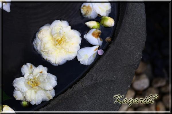 flower79a.jpg
