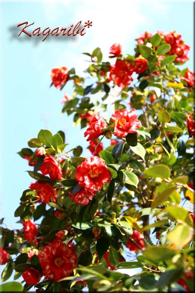 flower79d.jpg