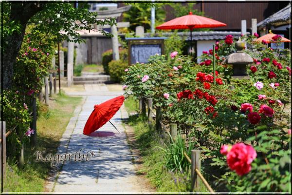 flower80a.jpg