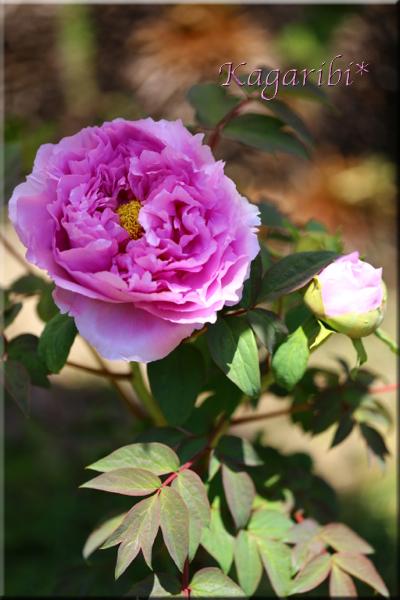 flower80b.jpg