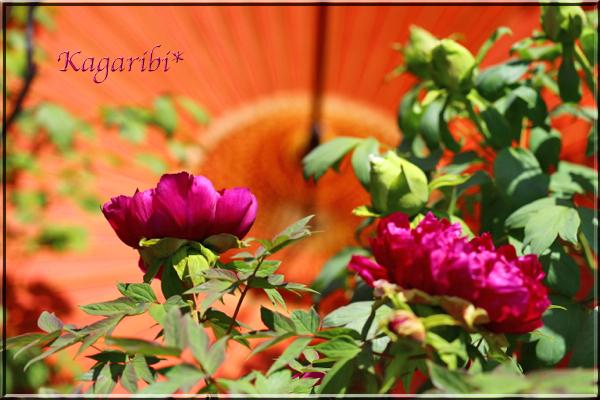 flower80c.jpg