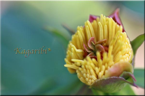 flower80d.jpg